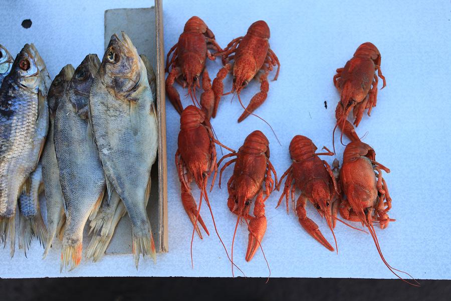 Ryby i raki