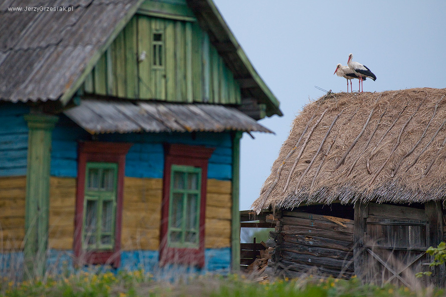 Bociany na Białorusi